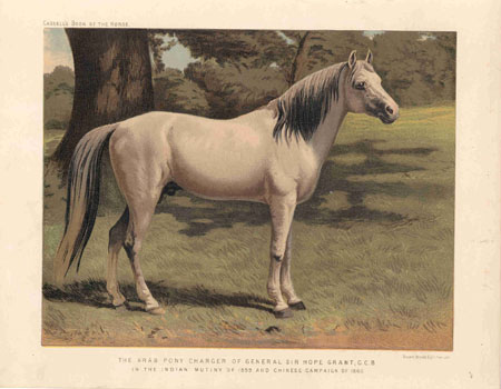 The Arab Pony Charger of General Sir Hope Grant, G