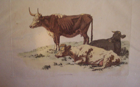 Cattle (untitled)