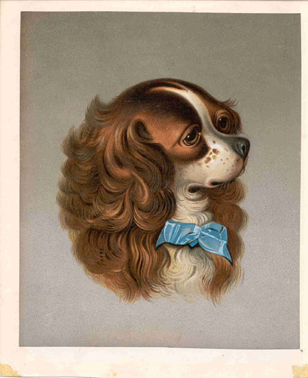 (untitled) Cavalier King Charles Spaniel